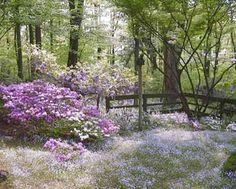 wildflowers, I really want to try and do this.