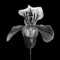 "Saatchi Online Artist Denis Maslennikov; Photography, ""Morning and evening someone waits at Matsushima! One-sided love... / ""Haiku Flowers"" (photo under acrylic glass)"" #art"