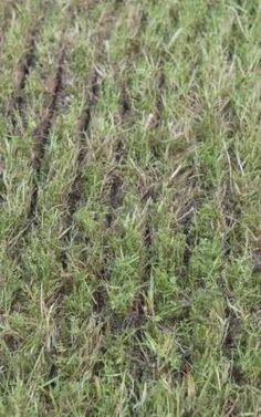 Rasen erneuern ohne umgraben. Tipps und Tricks die man beachten sollte. Für einen schönen gesunden Rasen