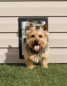 PetSafe Small Wall Entry Pet Dog Door The PetSafe Small Wall Dog Door Gives  Your Dog The Freedom He Deserves. The Small Wall Pet Door Is Designed  Especially ...