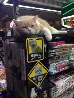 When you're so popular that you literally own a comic shop #catguardian #mascotte