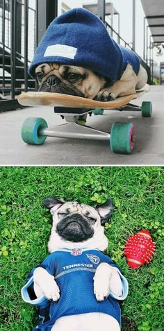 Doug The #pug ----- P.S. click on the image to check out our Funny Pugs T-shirt today! All sizes available in different colors.