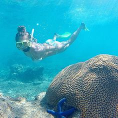 Crystal Clear Water, Snorkelling, South Seas, Catamaran, Fiji, Day Trip, Whale, Cruise, Island