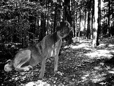 The Paranormal Pastor: The Wolf Woman of Mobile Alabama