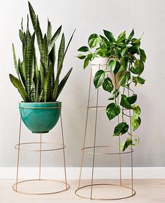 Cool Plant Stand Design Ideas for Indoor Houseplant - these literally look like upside down tomato cages.