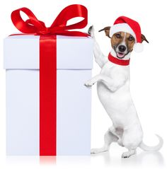 The Load Down Dog Blog: The Best Holiday Gifts for Dogs  Find the perfect gift for Fido this holiday season :)