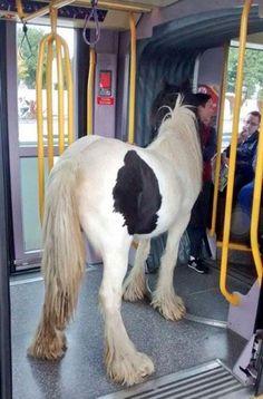 Burası İrlanda ve atın tramvayda seyahat etmesinde hiç bir engel yok .