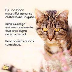 #FelizMiercolesPeludos #HappyDay #HappyWednesday #HiBonjour #BonneMercredi #BonneJourneé #Hello #Amorperruno #Foto #Photo #photography #Mascotas #Mascottes #Pets #Mascot #Peludos #Hairy #Furry #Shaggy #Cats #gato #Ilovecats #Perros #Dog #Ilovedog #catlove #Ilovecats #Noalabandono #adoptanocompres #RincóndelaVictoria