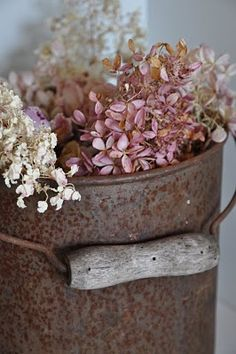 pretty dried Hydrangea - soon time to gather