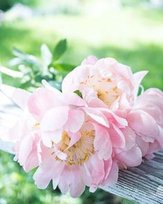Wish you all a great start to a new week  . Prajem dobrý štart do nového týždňa  . #prairiecharm #ptk_flowers #petalsandprops #postitfortheaesthetic #pocket_sweetness #mycountryhome #mymagicalmoments #mymagicalmorning #mycottageinstincts #mymomentswithflowers #myquietbeauty #mybeautifulsimplicity #bloomandgrowtogether #botanicalbeauty #botanicaldreamers #botanicalpickmeup #botanicaldaydreams #aquietstyle_space #alltheprettyflorals #allthingsbotanical #allwhatsbeautiful #alliseeispretty…