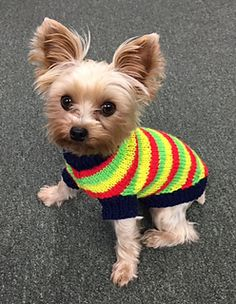 """Designed for adult teacup size Yorkies and small breed dogs uip to s16"""" chest. My first dog sweater pattern featured Tricot, my older yorkie. It was designed for puppy size. Now it's time to feature baby Jacquard who is all grown up at a whopping 4 & 1/2 pounds. Both Tricot and Jacquard are full grown and grew a bit longer than the original """"tiny dog sweater"""" pattern. Now we have added some stripes to keep the girls warm. Working full time at Crafty Hands Yarn Shop finds them styling and…"""