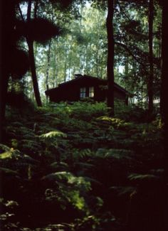 ♦♦ The woods behind the house would be thicker & darker
