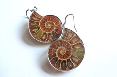 Fossil Earrings Ammonite Natural Nautical by FunkyMaMaJewelry, $28.00