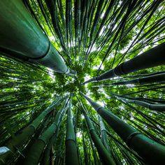 Photo Dazzling Bamboo by Nanouk el Gamal - Wijchers on 500px