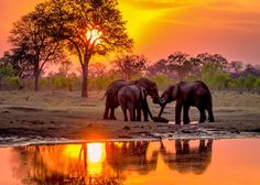 """""""Hwange Sunset Elephants at Waterhole-3"""" by ViewBug member Pegertler 