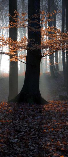 beautiful tree in a misty forest