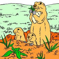 Coloriage marmotte a imprimer