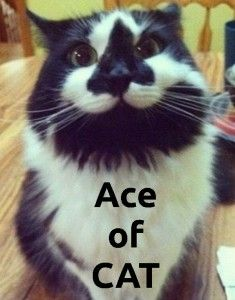 Cat with an Ace of Spades on his face.