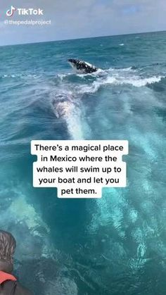 Beautiful Places To Travel, Cool Places To Visit, Dream Vacations, Vacation Spots, Travel Aesthetic, Mexico Travel, Whales, Wonders Of The World, Adventure Travel