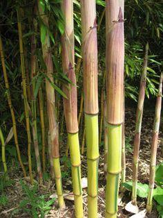 Die 186 Besten Bilder Von Garden Bamboo Tropical Garden