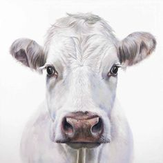 Cow Drawing, Cow Canvas, Cow Decor, Cow Pictures, Cow Face, Cow Painting, Farm Art, White Cow, Cute Cows