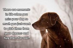 I miss my pets so much! If only I could bring them back from the rainbow bridge! I Love Dogs, Puppy Love, Miss My Dog, Pet Loss Grief, Pomes, Loss Quotes, Rainbow Bridge, Pet Memorials, Animal Quotes