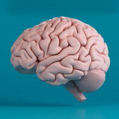 Human Brain 3D Obj - 3D Model