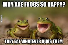 Extremely Happy Animals | Really Happy Funny Animals Why frogs are so happy