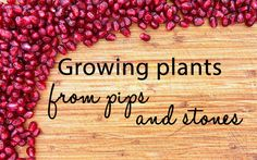 Growing plants from pips and stones of fresh fruit and veg can be a very satisfying experience. There are loads to choose from and, in the long run, it's of course cheaper to grow your own fruit or veg plants.