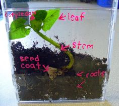 using old cd cases to grow beans. Then can use a sharpie or dry erase marker to label parts of the plant for older kids.