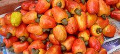 Caju. Fruta típica do Nordeste brasileiro.  Ela é deliciosa e tem um aroma fantástico.