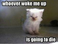 Funny Cats : 16 Funny Cat Photos with Caption