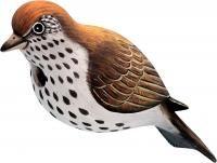 Songbird Essentials Tordo de eremita Birdhouse
