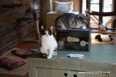 Neko no Jikan Amemura – Osaka Cat Cafe Part 1
