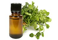 coriander | Massage to Treat Constipation and Boost Digestion 4 drops Coriander 4 drops Spearmint 2 drops Neroli 1 tablespoon F.C.O. (Fractionated Coconut Oil) - See more at: http://essentialhealth.com/2012/09/coriander-oil-some-uses/#sthash.Y3kAtKdL.dpuf