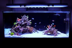 Minimalist Aquascaping - Page 41 - Reef Central Online Community