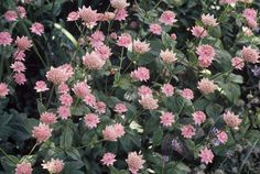 Symmetrie De basis voor een klassieke tuin bestaat vaak uit een patroon van klinkerpaden en plantvakken, geïnspireerd op de Franse baroktuinen. Symmetrie is hierbij belangrijk, dit zorgt voor