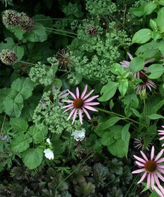 Building Better Borders: Use plant combinations that focus on complementary colors, textures, and forms. See how another gardener does it at www.finegardening...