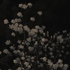Discover recipes, home ideas, style inspiration and other ideas to try. Gray Aesthetic, Night Aesthetic, Black And White Aesthetic, Aesthetic Themes, Aesthetic Photo, Aesthetic Pictures, Aesthetic Grunge Black, Dark Feeds, Yennefer Of Vengerberg