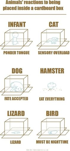 Reactions to being inside a box.
