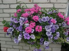 Stunning 50+ Awesome Plant Combinations for Window Boxes https://gardenmagz.com/50-awesome-plant-combinations-for-window-boxes/