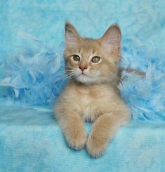 tiny meow