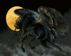 images of unicorns and pegasus Pegasus, Magical Creatures, Fantasy Creatures, Fairytale Creatures, Fantasy World, Fantasy Art, Unicorn Fantasy, Unicorn Art, Horse Wallpaper