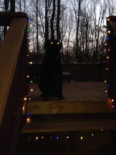 We may have gone too far with the Christmas lights this year...