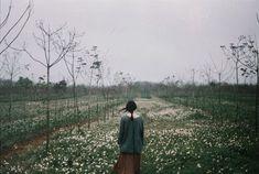 Картинка с тегом «flowers, field, and girl»