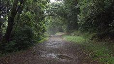 Horto Florestal - Nucleo da pedra grande.