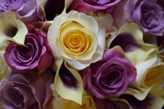 Thistle Bee the Florist- Serving North and Central NJ & Lehigh Valley