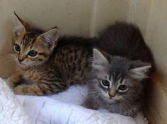 My friend's new kittens <3