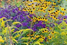 Garden ideas, Border ideas, Plant Combinations, Flowerbeds Ideas, Summer Borders, Fall borders, Asters, New England Aster, Rudbeckia Triloba...