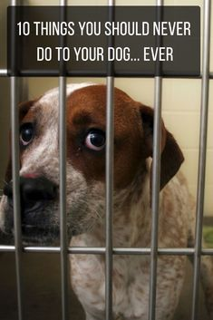 You should avoid doing these things to your dog at all costs. #dogs #animals #pets